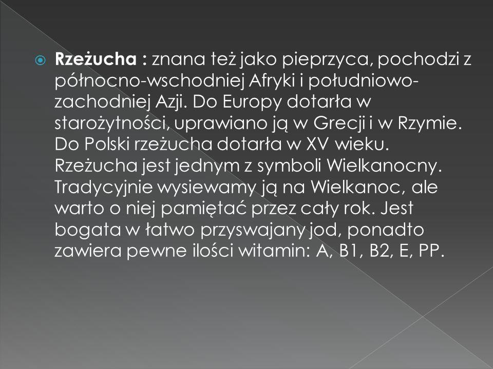 Rzeżucha : znana też jako pieprzyca, pochodzi z północno-wschodniej Afryki i południowo- zachodniej Azji. Do Europy dotarła w starożytności, uprawiano