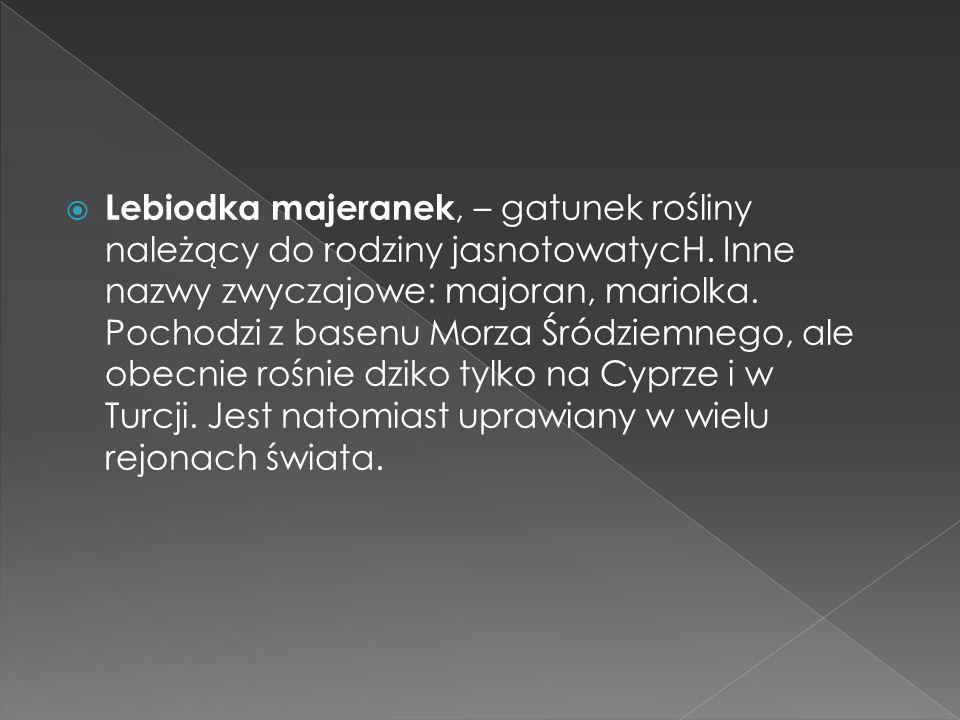 Lebiodka majeranek, – gatunek rośliny należący do rodziny jasnotowatycH. Inne nazwy zwyczajowe: majoran, mariolka. Pochodzi z basenu Morza Śródziemneg