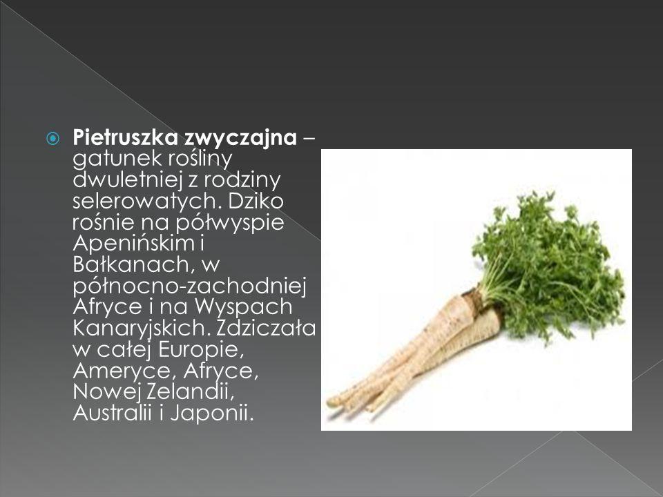 Pietruszka zwyczajna – gatunek rośliny dwuletniej z rodziny selerowatych. Dziko rośnie na półwyspie Apenińskim i Bałkanach, w północno-zachodniej Afry