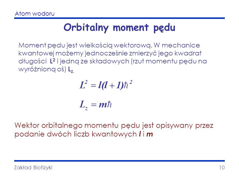 Atom wodoru Zakład Biofizyki10 Orbitalny moment pędu Moment pędu jest wielkością wektorową. W mechanice kwantowej możemy jednocześnie zmierzyć jego kw