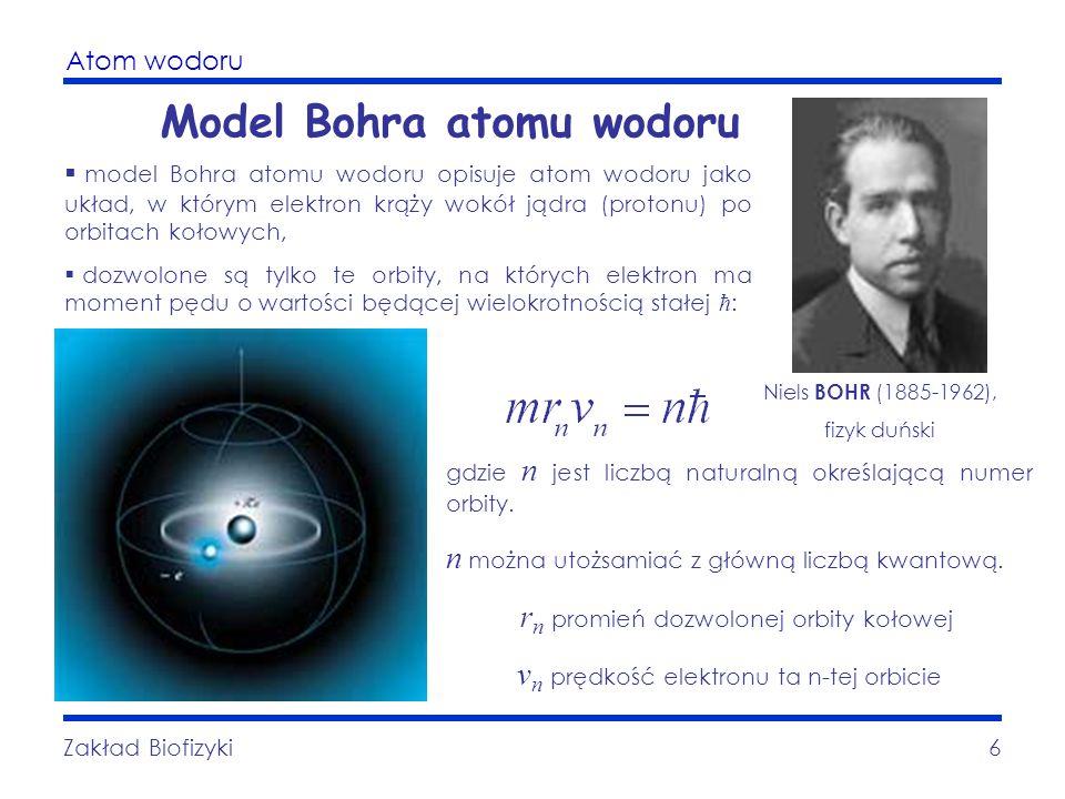 Atom wodoru Zakład Biofizyki6 Model Bohra atomu wodoru gdzie n jest liczbą naturalną określającą numer orbity. n można utożsamiać z główną liczbą kwan