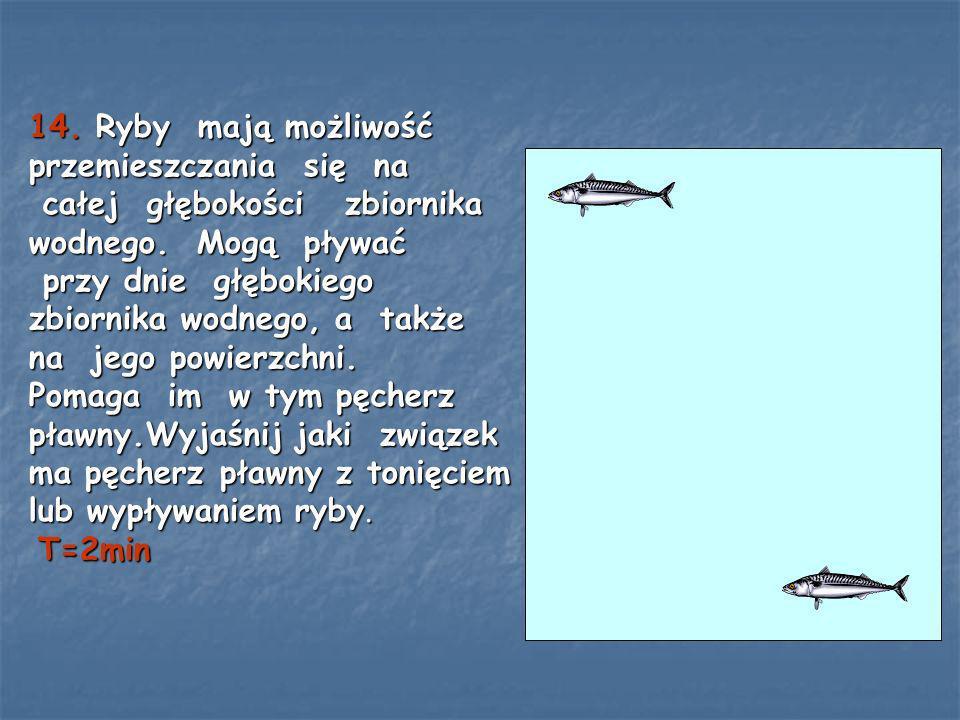 14. Ryby mają możliwość przemieszczania się na całej głębokości zbiornika wodnego. Mogą pływać przy dnie głębokiego zbiornika wodnego, a także na jego