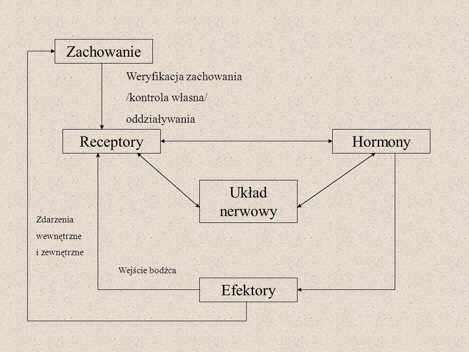 Zachowanie Receptory Układ nerwowy Hormony Efektory Zdarzenia wewnętrzne i zewnętrzne Wejście bodźca Weryfikacja zachowania /kontrola własna/ oddziały