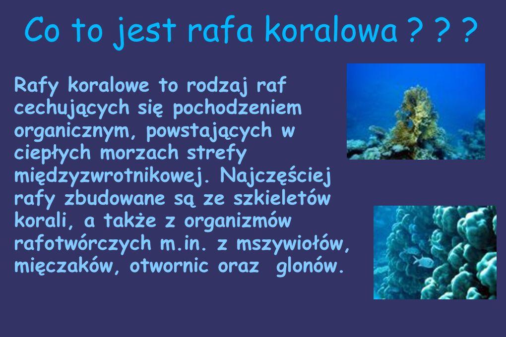 Jest ich bardzo dużo, a każdy z rodzajów posiada inne, różne cechy charakterystyczne. Jednak większość ryb koralowych ma ciekawie skomponowaną kolorys