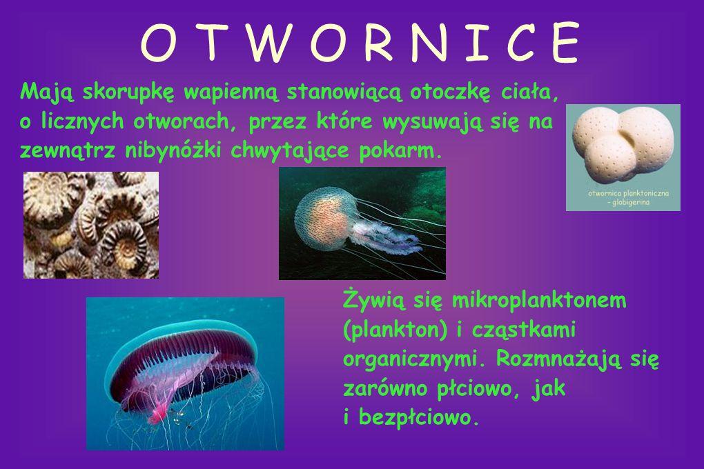 MIĘCZAKI Do tego typu zwierząt należą 3 główne gromady: małże, ślimaki i głowonogi. gromada: głowonogi gromada: małże gromada: ślimaki
