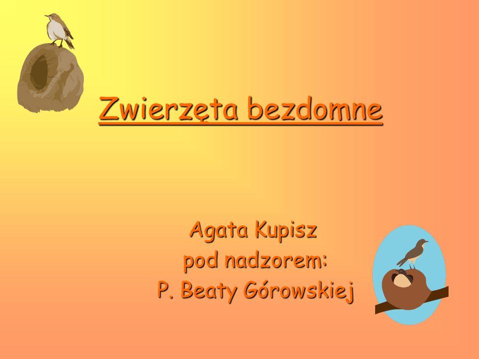 Zwierzęta bezdomne Agata Kupisz pod nadzorem: pod nadzorem: P. Beaty Górowskiej P. Beaty Górowskiej