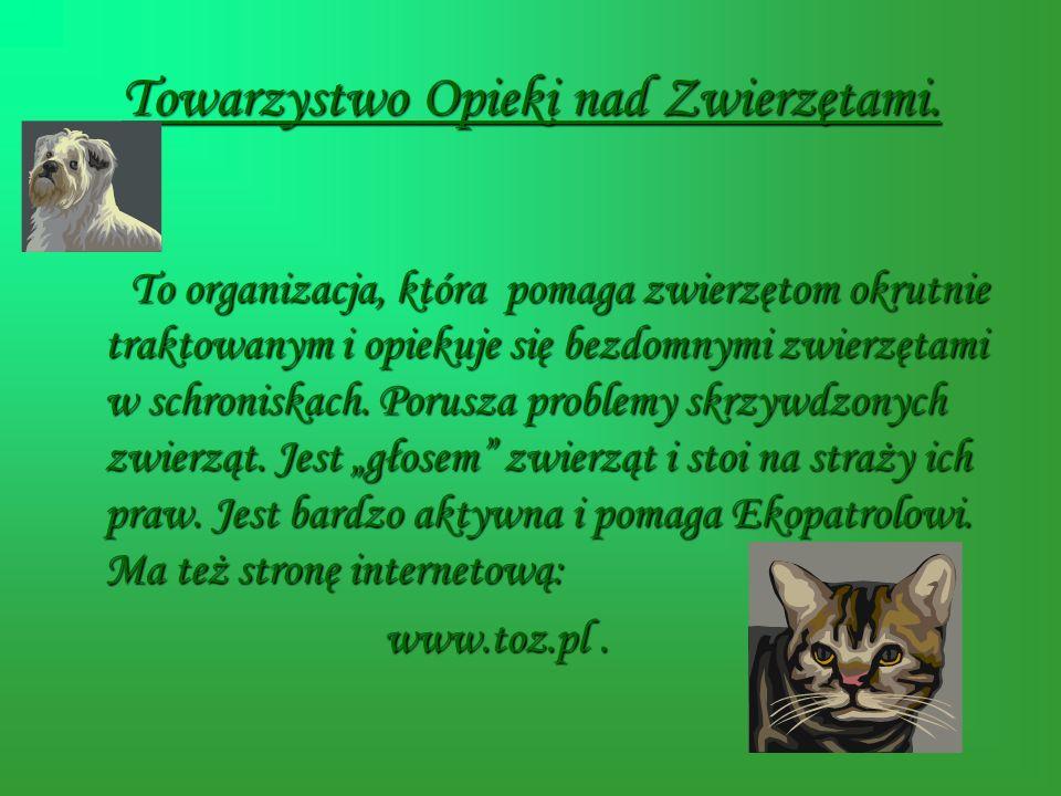 Towarzystwo Opieki nad Zwierzętami. T o organizacja, która pomaga zwierzętom okrutnie traktowanym i opiekuje się bezdomnymi zwierzętami w schroniskach