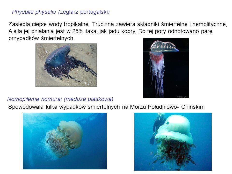 Physalia physalis (żeglarz portugalski) Zasiedla ciepłe wody tropikalne. Trucizna zawiera składniki śmiertelne i hemolityczne, A siła jej działania je