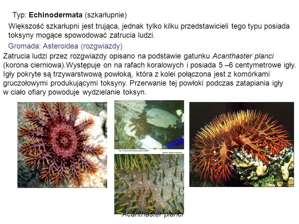 Typ: Echinodermata (szkarłupnie) Większość szkarłupni jest trująca, jednak tylko kilku przedstawicieli tego typu posiada toksyny mogące spowodować zat