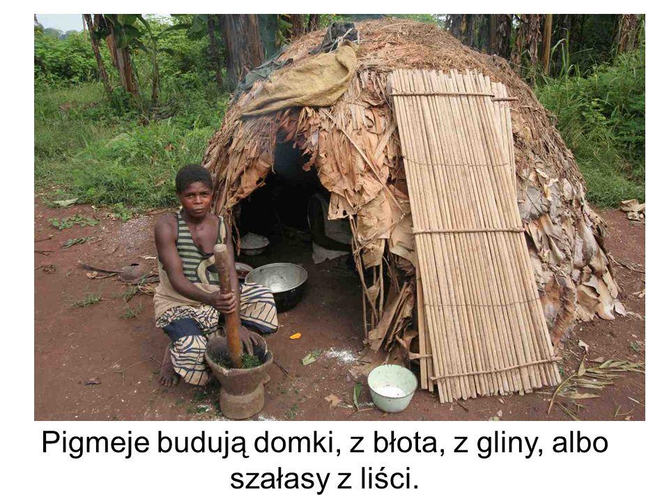 Pigmeje są najstarszym a zarazem najbardziej prymitywnym ludem Afryki. Nazywani są ludźmi lasu.