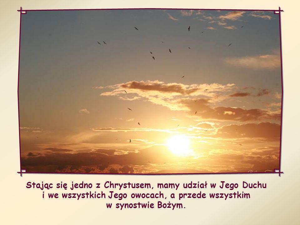 Słowa te znajdują się w centrum hymnu, który święty Paweł wyśpiewuje na cześć piękna, nowości i wolności życia chrześcijańskiego. Życie takie jest owo
