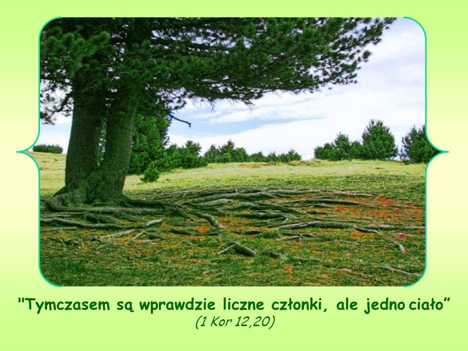 Tymczasem są wprawdzie liczne członki, ale jedno ciało (1 Kor 12,20)
