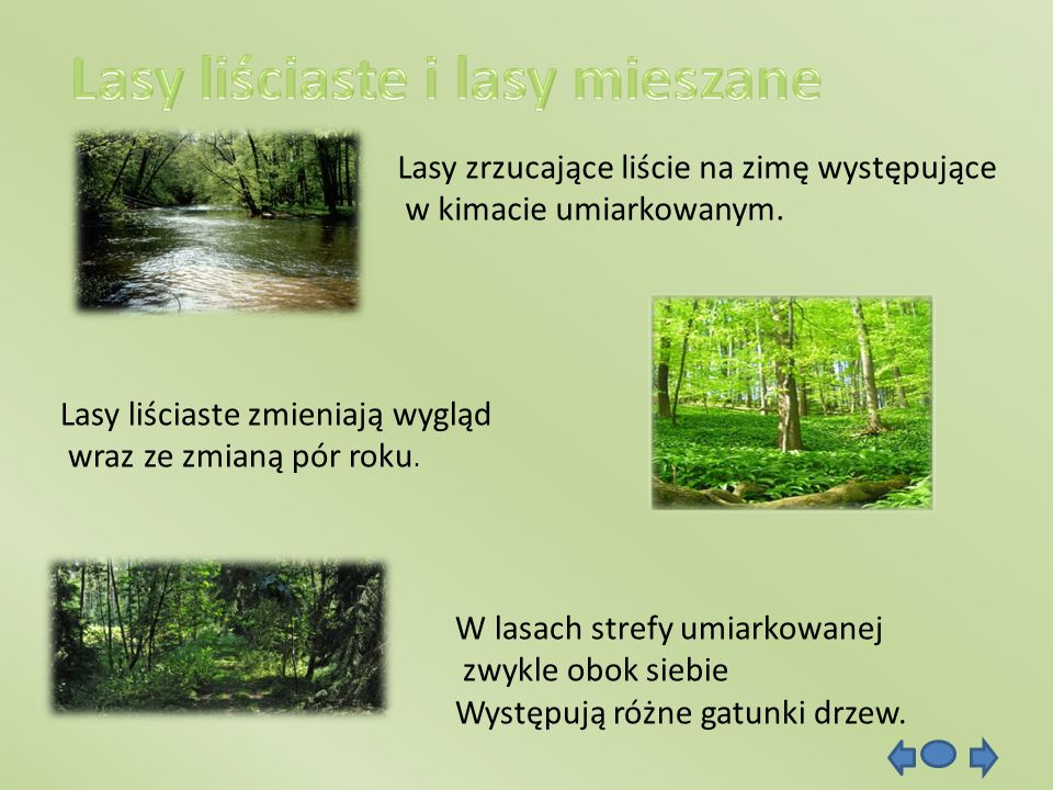 Lasy zrzucające liście na zimę występujące w kimacie umiarkowanym. Lasy liściaste zmieniają wygląd wraz ze zmianą pór roku. W lasach strefy umiarkowan