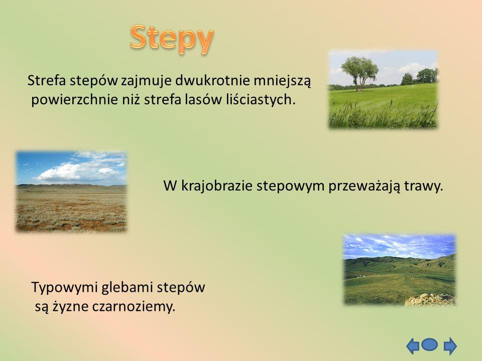 Strefa stepów zajmuje dwukrotnie mniejszą powierzchnie niż strefa lasów liściastych. W krajobrazie stepowym przeważają trawy. Typowymi glebami stepów