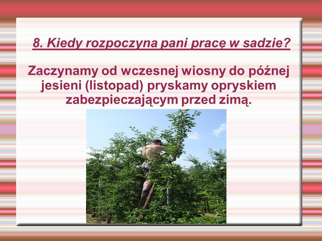 8. Kiedy rozpoczyna pani pracę w sadzie.