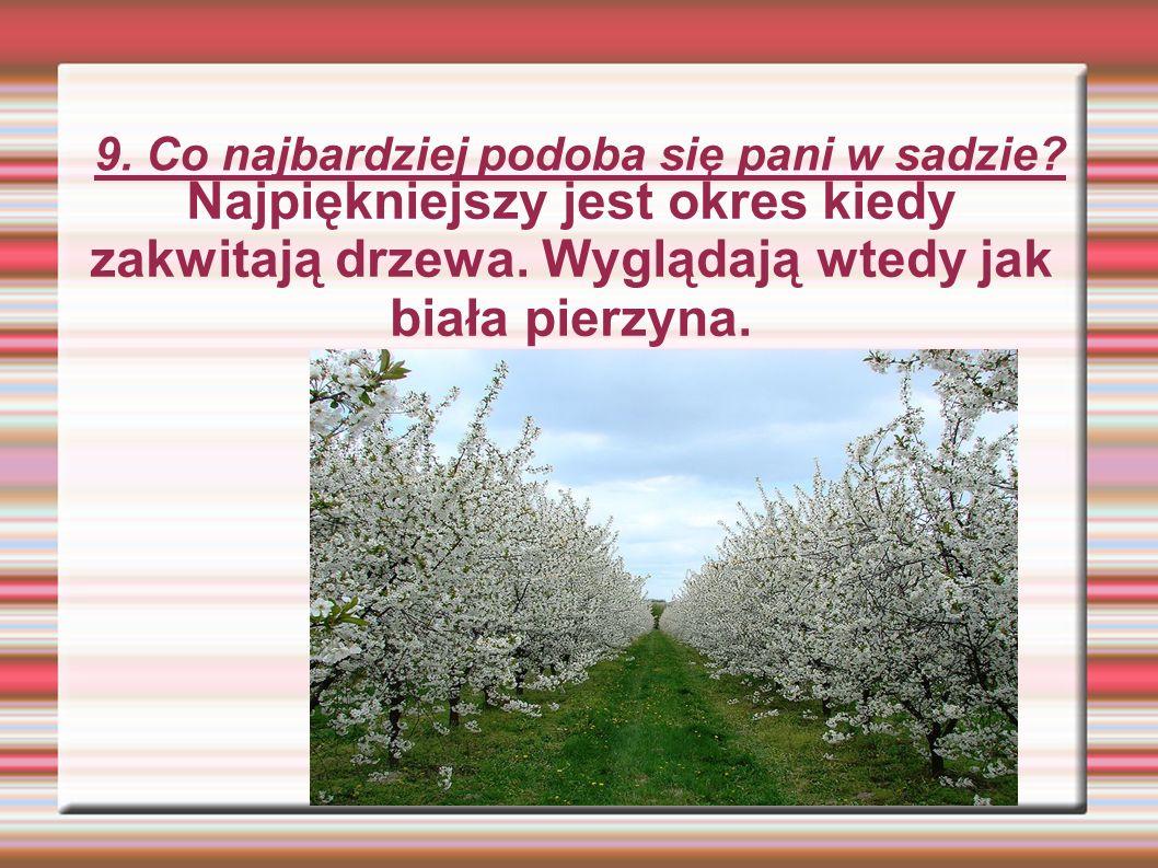9. Co najbardziej podoba się pani w sadzie. Najpiękniejszy jest okres kiedy zakwitają drzewa.