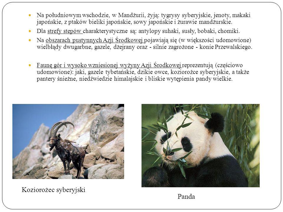 Koziorożec syberyjski Panda Na południowym wschodzie, w Mandżurii, żyją: tygrysy syberyjskie, jenoty, makaki japońskie, z ptaków bieliki japońskie, sowy japońskie i żurawie mandżurskie.