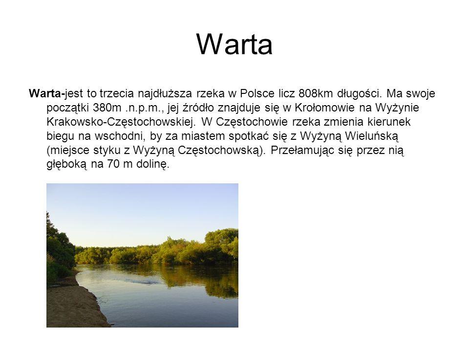 Warta Warta-jest to trzecia najdłuższa rzeka w Polsce licz 808km długości. Ma swoje początki 380m.n.p.m., jej źródło znajduje się w Krołomowie na Wyży