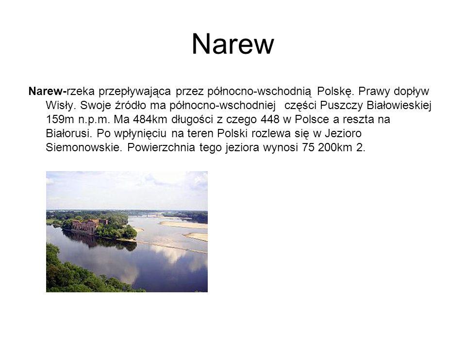 Narew Narew-rzeka przepływająca przez północno-wschodnią Polskę. Prawy dopływ Wisły. Swoje źródło ma północno-wschodniej części Puszczy Białowieskiej