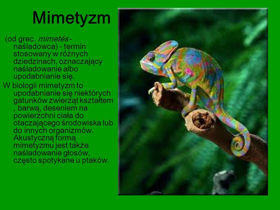 Mimetyzm (od grec. mimetés - naśladowca) - termin stosowany w różnych dziedzinach, oznaczający naśladowanie albo upodabnianie się. W biologii mimetyzm