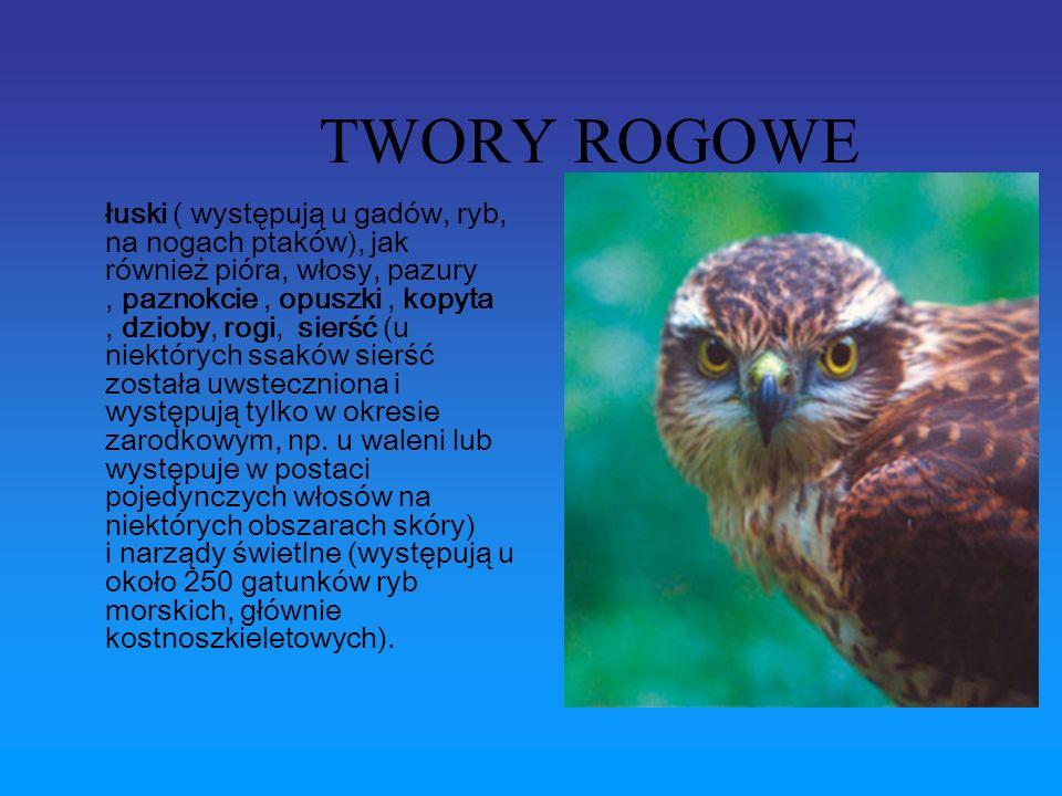 TWORY ROGOWE łuski ( występują u gadów, ryb, na nogach ptaków), jak również pióra, włosy, pazury, paznokcie, opuszki, kopyta, dzioby, rogi, sierść (u