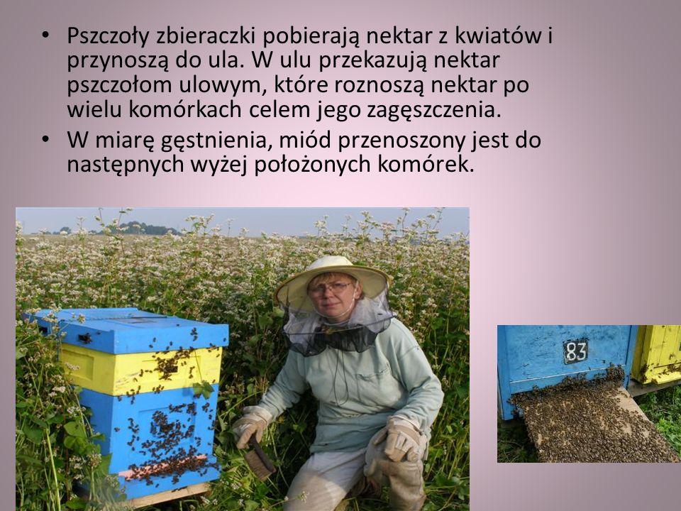 Pszczoły muszą odwiedzić około 4 milionów kwiatów, aby zebrać nektar na 1 kg miodu. Podczas jednego
