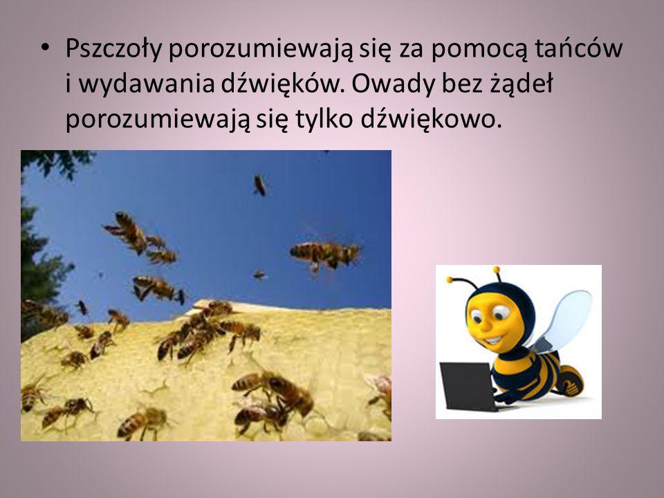 Pszczoły porozumiewają się za pomocą tańców i wydawania dźwięków.