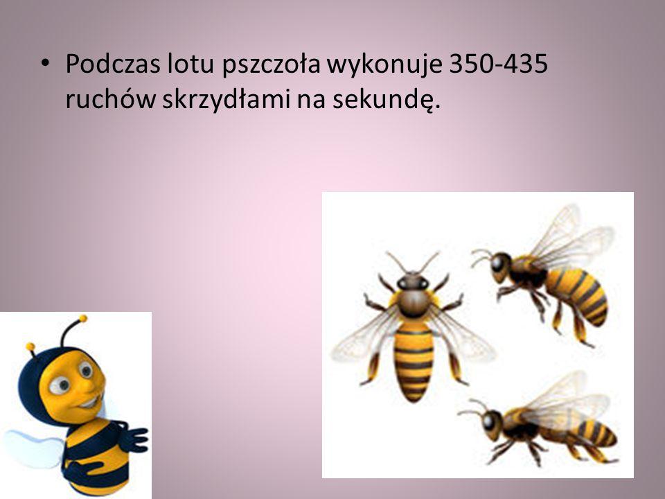 Pszczoły porozumiewają się za pomocą tańców i wydawania dźwięków. Owady bez żądeł porozumiewają się tylko dźwiękowo.