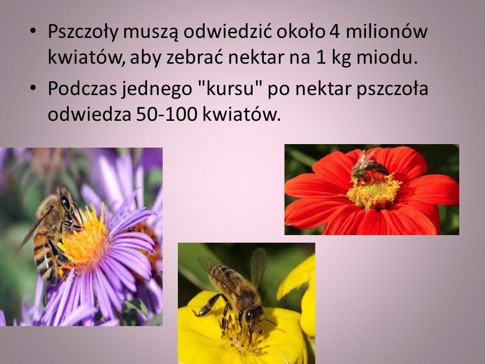 Pszczoły muszą odwiedzić około 4 milionów kwiatów, aby zebrać nektar na 1 kg miodu.