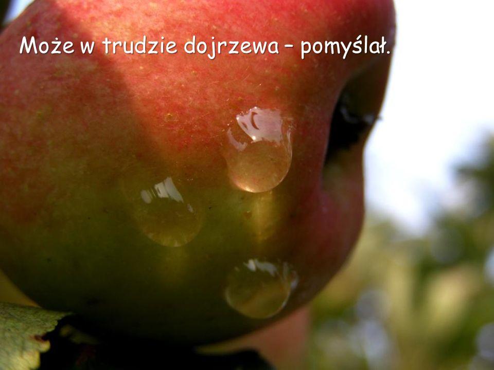 Zobaczył łzę na gładkim jabłku.