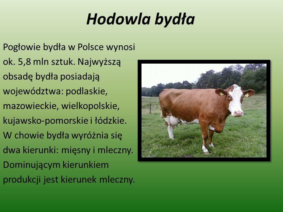 Hodowla bydła Pogłowie bydła w Polsce wynosi ok. 5,8 mln sztuk. Najwyższą obsadę bydła posiadają województwa: podlaskie, mazowieckie, wielkopolskie, k