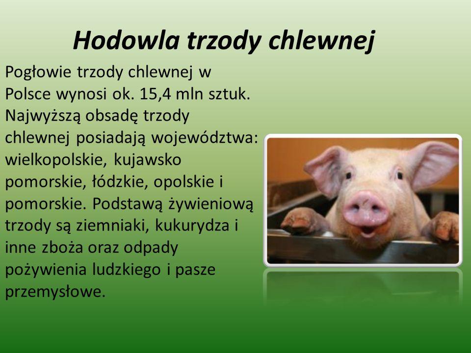Hodowla trzody chlewnej Pogłowie trzody chlewnej w Polsce wynosi ok. 15,4 mln sztuk. Najwyższą obsadę trzody chlewnej posiadają województwa: wielkopol