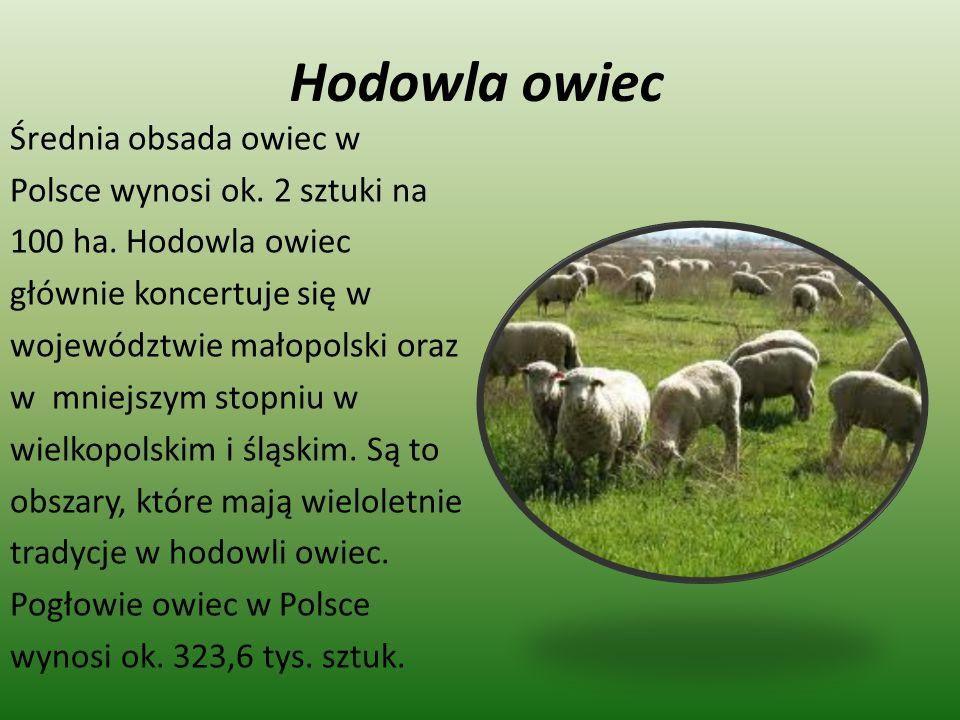 Hodowla owiec Średnia obsada owiec w Polsce wynosi ok. 2 sztuki na 100 ha. Hodowla owiec głównie koncertuje się w województwie małopolski oraz w mniej