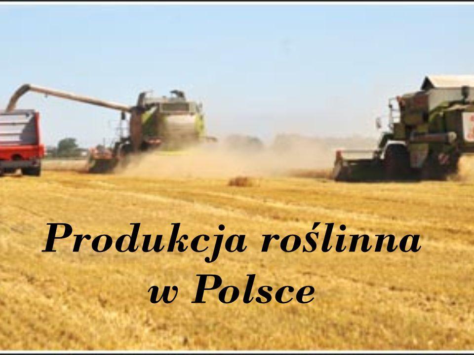 Produkcja ro ś linna w Polsce