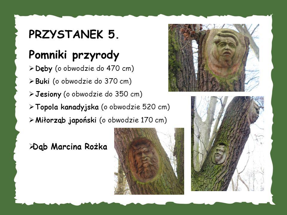 PRZYSTANEK 5. Pomniki przyrody Dęby (o obwodzie do 470 cm) Buki (o obwodzie do 370 cm) Jesiony (o obwodzie do 350 cm) Topola kanadyjska (o obwodzie 52