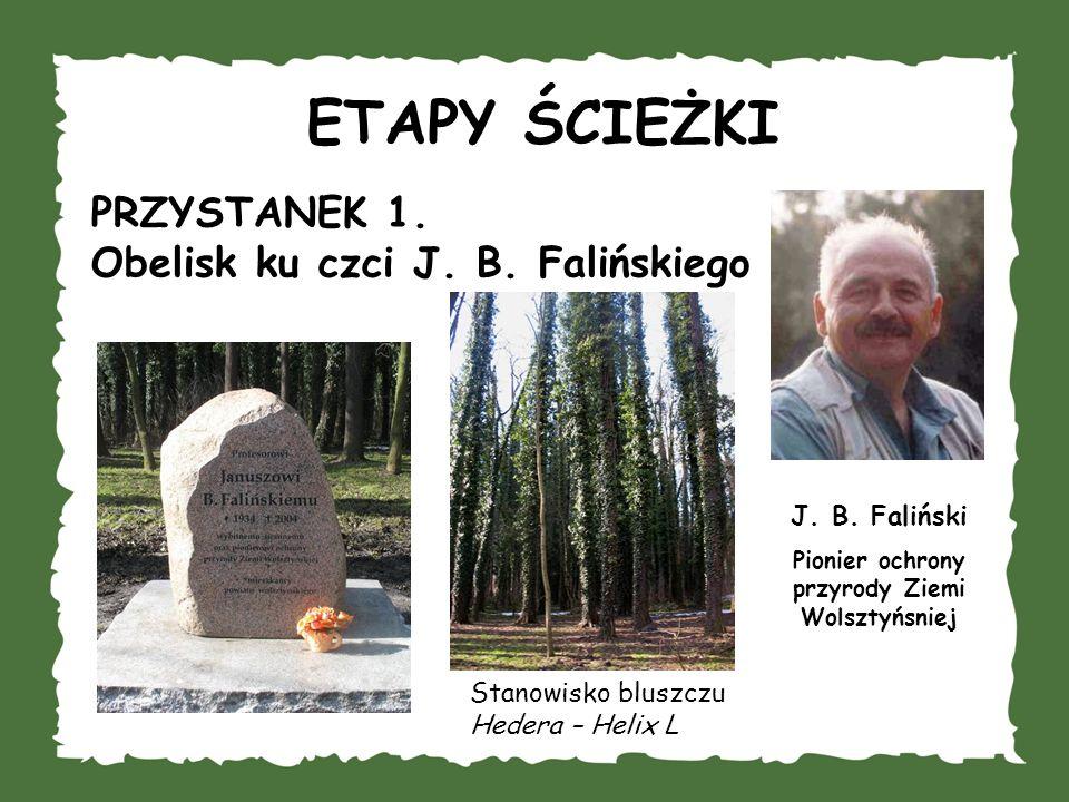 ETAPY ŚCIEŻKI PRZYSTANEK 1. Obelisk ku czci J. B. Falińskiego J. B. Faliński Pionier ochrony przyrody Ziemi Wolsztyńsniej Stanowisko bluszczu Hedera –