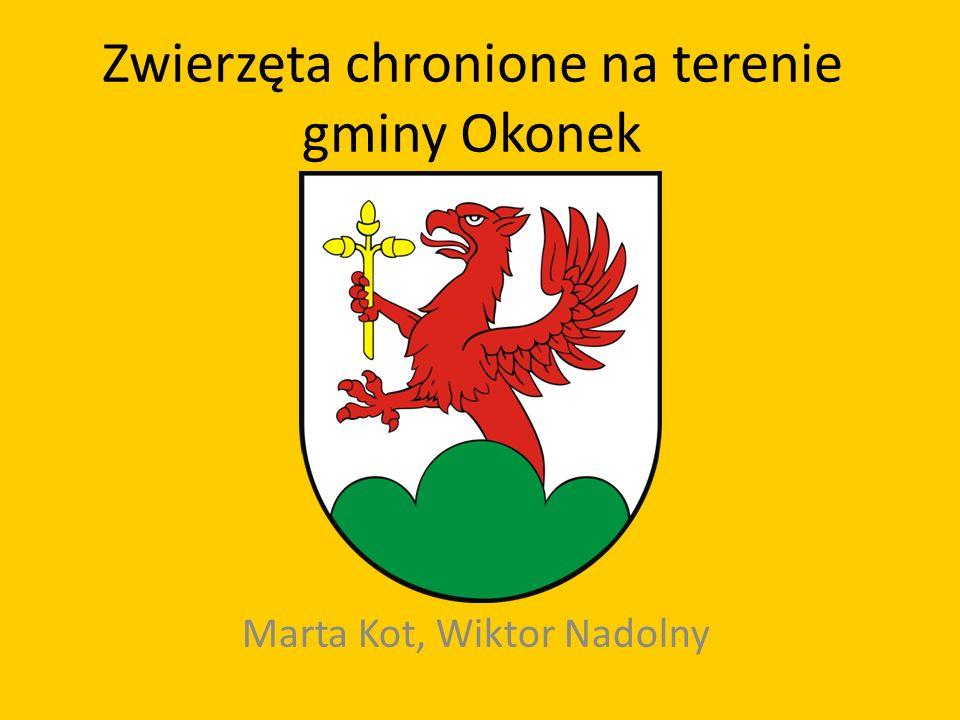 Zwierzęta chronione na terenie gminy Okonek Marta Kot, Wiktor Nadolny