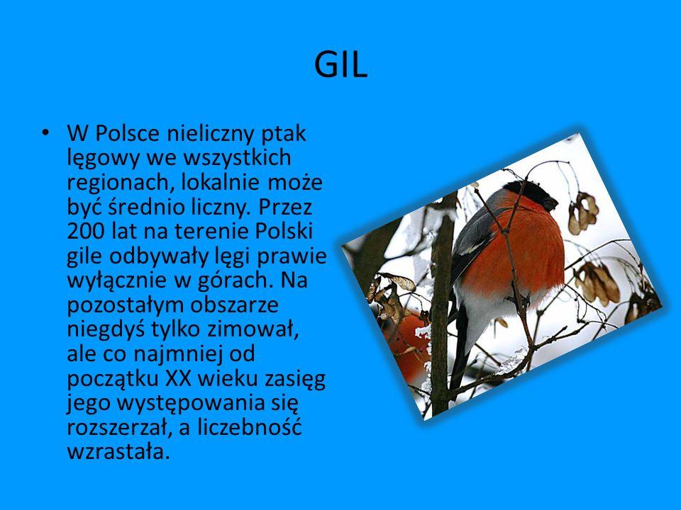 GIL W Polsce nieliczny ptak lęgowy we wszystkich regionach, lokalnie może być średnio liczny. Przez 200 lat na terenie Polski gile odbywały lęgi prawi