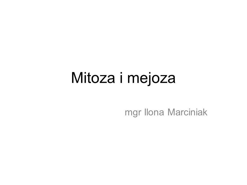 Mitoza i mejoza mgr Ilona Marciniak
