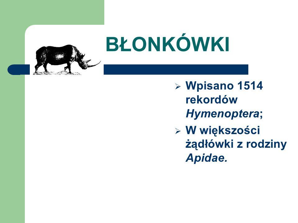 BŁONKÓWKI Wpisano 1514 rekordów Hymenoptera; W większości żądłówki z rodziny Apidae.