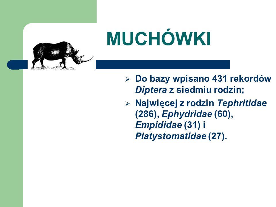 MUCHÓWKI Do bazy wpisano 431 rekordów Diptera z siedmiu rodzin; Najwięcej z rodzin Tephritidae (286), Ephydridae (60), Empididae (31) i Platystomatida