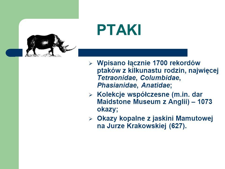 PTAKI Wpisano łącznie 1700 rekordów ptaków z kilkunastu rodzin, najwięcej Tetraonidae, Columbidae, Phasianidae, Anatidae; Kolekcje współczesne (m.in.