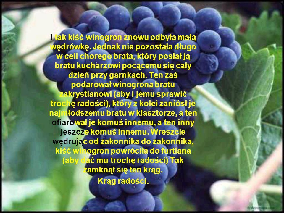 Brat furtian ostrożnie wziął winogrona i podziwiał je przez cały ranek. Rzeczywiście, była to cudowna, wspaniała kiść. W pewnej chwili przyszedł mu do