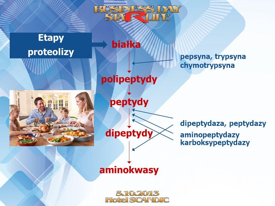 pepsyna, trypsyna chymotrypsyna dipeptydaza, peptydazy białka polipeptydy peptydy dipeptydy aminokwasy aminopeptydazy karboksypeptydazy Etapy proteoli