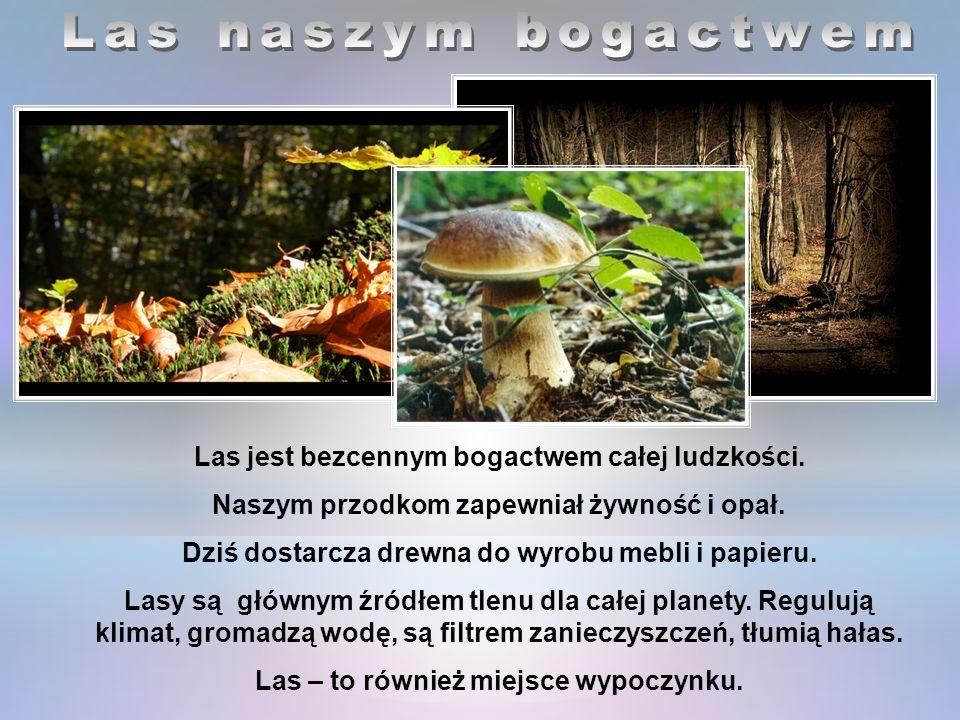 Las jest bezcennym bogactwem całej ludzkości.Naszym przodkom zapewniał żywność i opał.