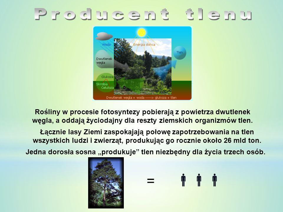 Las można śmiało nazwać najczystszą i najbardziej przyjazną środowisku fabryką na świecie.