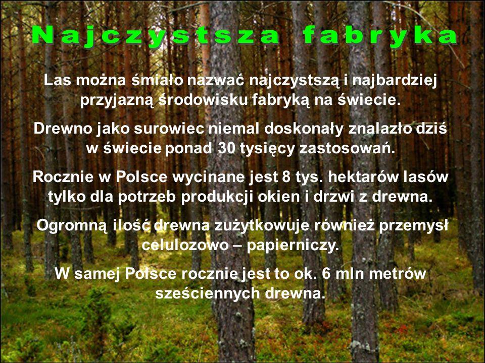 W leśnym powietrzu znajduje się około 60 razy mniej chorobotwórczych zarazków niż w powietrzu miast.