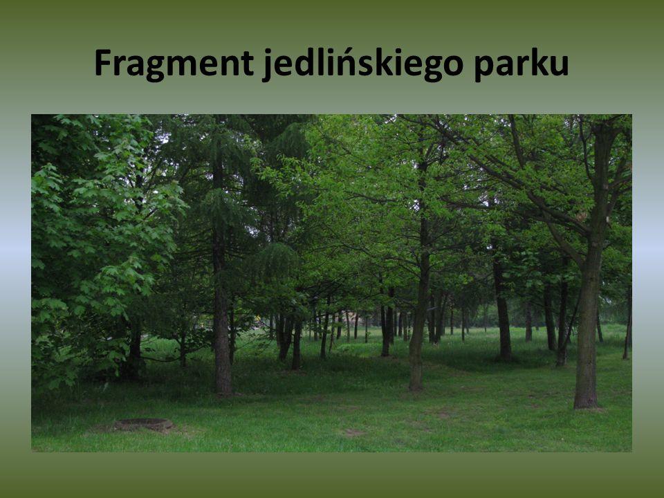 Fragment jedlińskiego parku