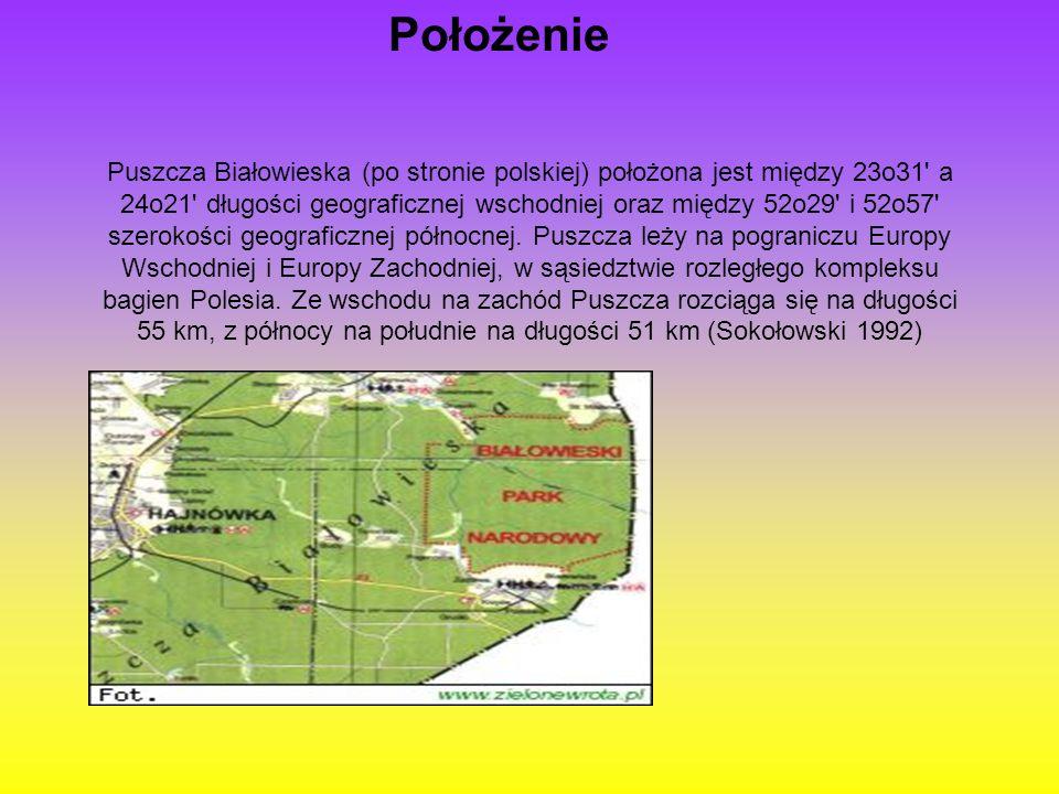 Puszcza Białowieska (po stronie polskiej) położona jest między 23o31' a 24o21' długości geograficznej wschodniej oraz między 52o29' i 52o57' szerokośc