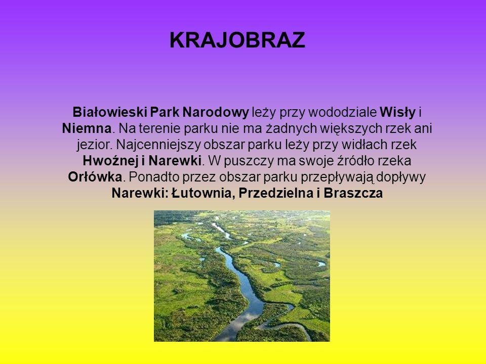 KRAJOBRAZ Białowieski Park Narodowy leży przy wododziale Wisły i Niemna. Na terenie parku nie ma żadnych większych rzek ani jezior. Najcenniejszy obsz